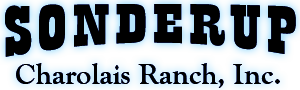 Sonderup Charolais Ranch Inc