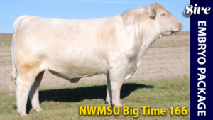 NWMSU Big Time 166 - Charolais donor sire