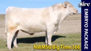 NWMSU Big Time 166 - Charolais donor sire