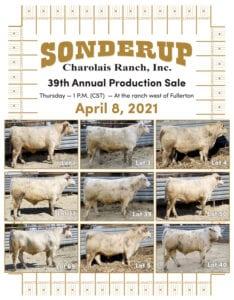 2021 Sonderup Charolais Ranch Inc Bull Sale - April 8, 2021